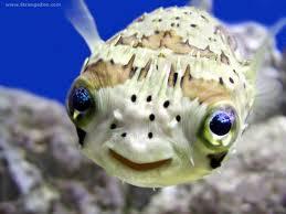 queer fish